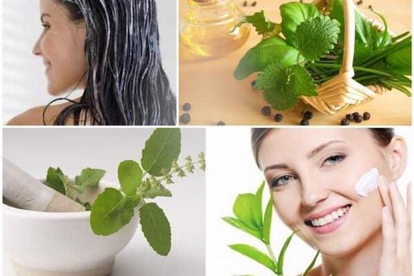 Tinh dầu hương nhu giúp cải thiện làn da