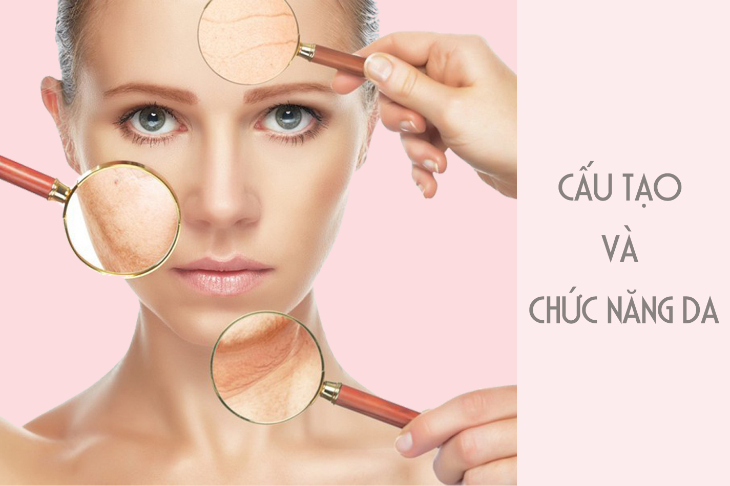 Cấu tạo và chức năng của da